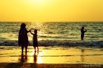 Summer Golden Hou...