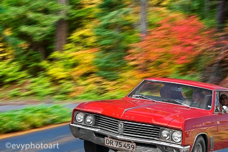 Through the Autumn Woods