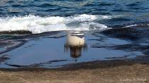 Reflection Of Nub...