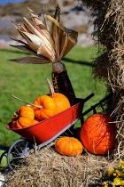 """Fall Harvest..."