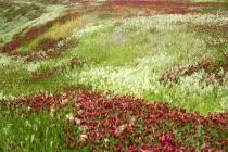 A Colorful Oklaho...
