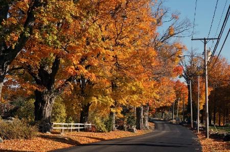 New England Roadside Color