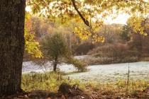 Frosty Fall Morni...
