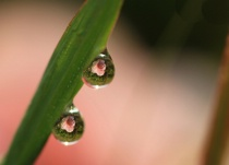 Dewdrops With Wil...