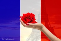 A Rose for Paris