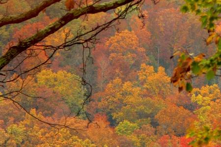 autumn in Smoky Mountains