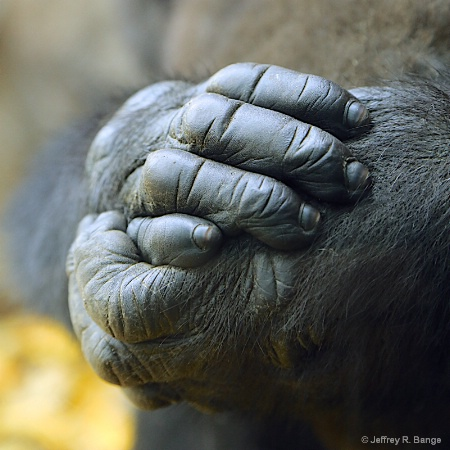 """Hands Of A Gentle Giant"""