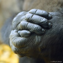 """Hands Of A G..."