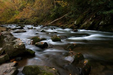 Natahala River Beauty