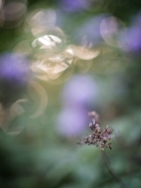 Buds and Bokeh