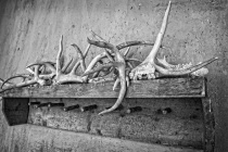 Antler Collection