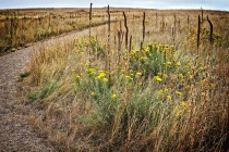 Colorado Prairie