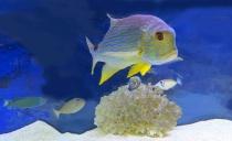 Fish Tank At Good...