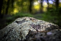 Lichens and Fores...