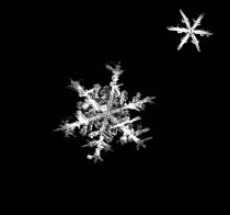Snowflakes On My ...