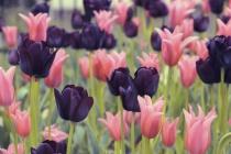 A Garden Of Prett...
