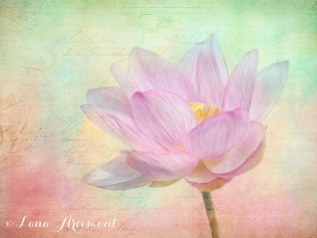 Water Lilly with Texture