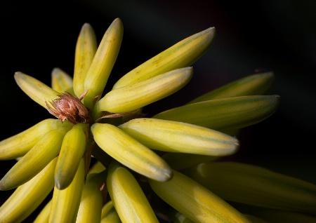 Aloe Outreach