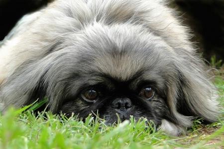 Sneak In The Grass