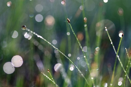 Grass And Sunlight