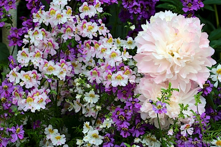 """A Gardeners Delight"""