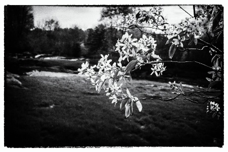 Blooms By the River