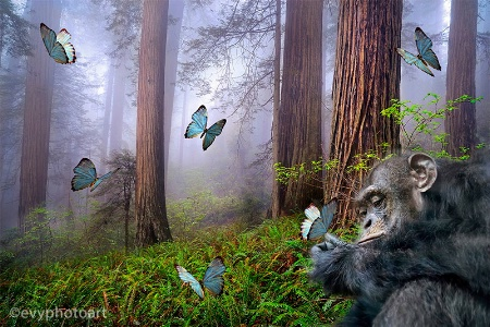 Rainforest Fauna