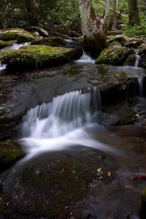 Creek to the Natahala