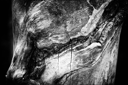 Weathered Wood Abstract