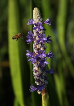Bee Approach