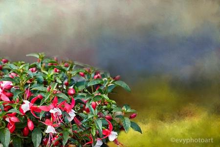 Mini Fuchsia