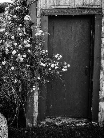 Roses at the Door