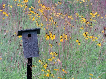 Bird House In The Field