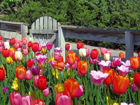 Tulipgate 2