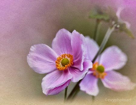 Late Summer Flower