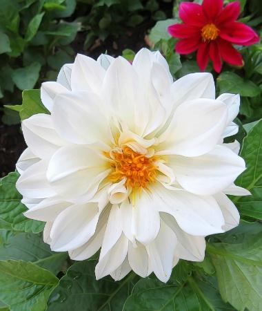 White Flower Day