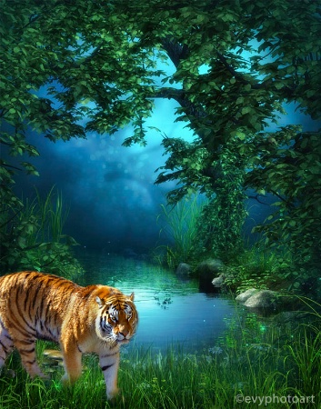Lonely Tiger