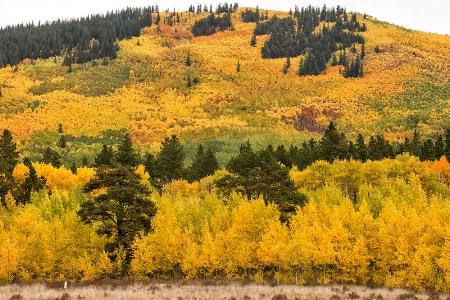 Rocky Mountain Fall Color