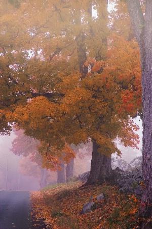 Foggy October Morning
