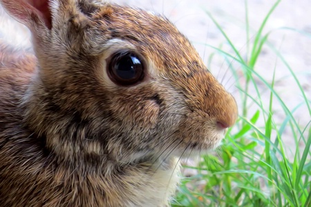 Portrait Of A Bunny