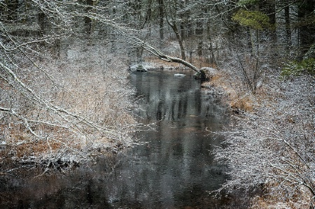 A Winter Frosting