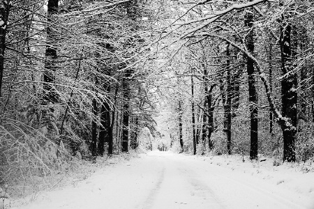 The Road Through the Snowy Woods