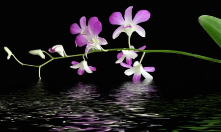 Flooded Orchid