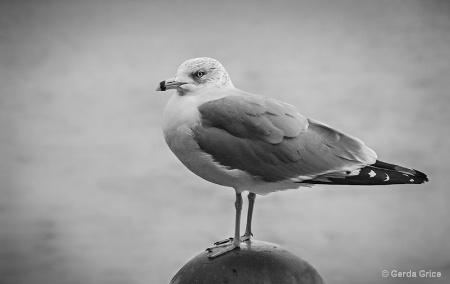 Gull on Globe