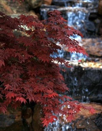 Springtime Red