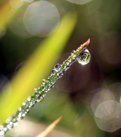 Fine Raindrop Reflections