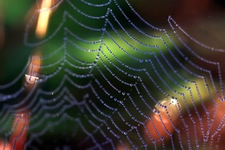 A Slice Of The Web