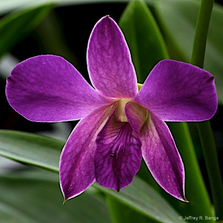 Orchid # 2