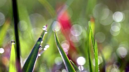 Bokeh In The Grass