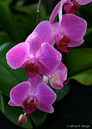 Orchid #19